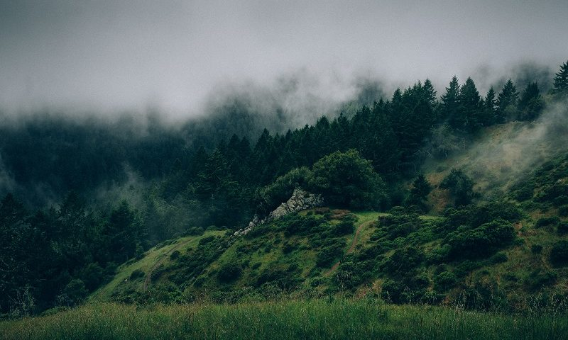 persona no toxica naturaleza bosque paz tranquilidad